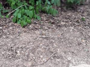ธรรมชาติข้างทาง เห็นตัวอะไรพรางตังไหม โป่งลึก อช แก่งกระจาน เพชรบุรี